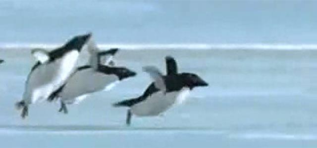 【CM】ペンギンが空を飛ぶ・・!?