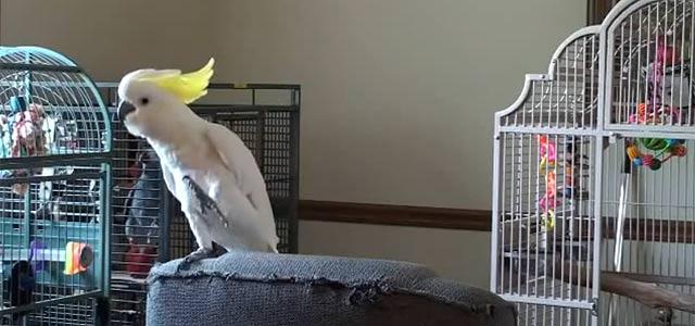 オモシロペット動画